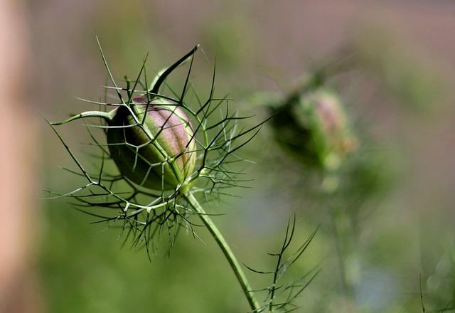une graine de fleur