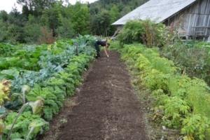 potager en permaculture avec une butte