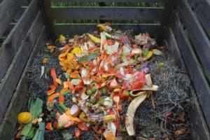 Un compost au début