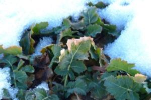 potager en hiver
