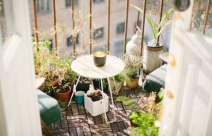 un potager sur un balcon